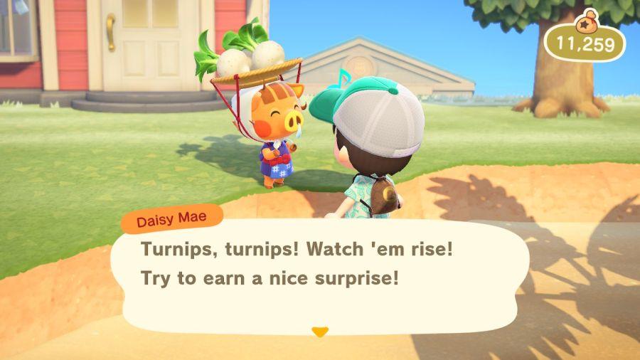 Daisy Mae - u niej kupisz rzepe w Animal Crossing